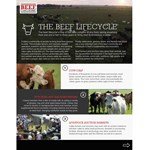 The Beef Lifecycle