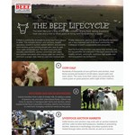 Beef lifecycle icon